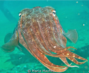This curious fellow was found on The Boonsung Wreck. by Maria Machin