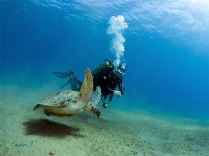 Green turtle and Jean Claude, nice dive by Sven Tramaux