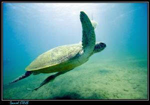Green turtle :-D by Daniel Strub
