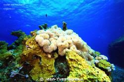 Balaclava Mauritius at 7 metres  Dslr Eos 7d Canon,Jean-Y... by Jean-Yves Bignoux