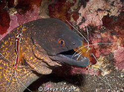 shot taken at cleaning station Tulumben, Bali by Steve Wright