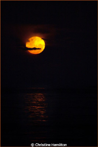 Moonrise over the Dive Boat by Christine Hamilton