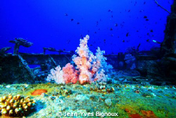 Mauritius Wreck Dive ,Artificial reef by Jean-Yves Bignoux