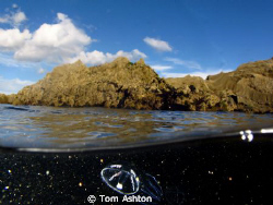 Primordial soup Plankton swarm at Eyemouth, Scotland by Tom Ashton