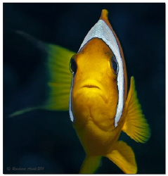 -here I am-