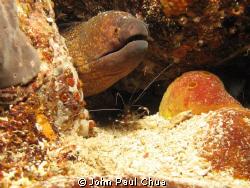 Marine Life - Moray Eel surrounded with shrimps. Photo ta... by John Paul Chua