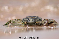 let's go swimming! by Paola Pallocci