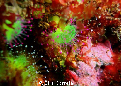 Absolut Beauty! by Elia Correia