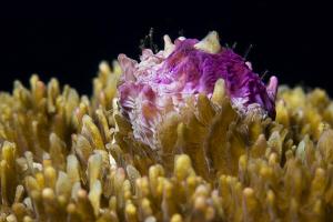 STONY  Stony Corals - Scleractinia - Steinkorallen   by Jörg Menge