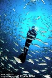 Inside the school of fish by Edson Acioli