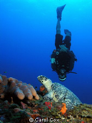 Divemaster with a turtle by Carol Cox