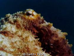 Octopus eye @ crash Boat beach Puerto Rico; Sealife DC120... by Carlos Pérez
