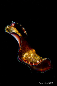 Nightswimming.......