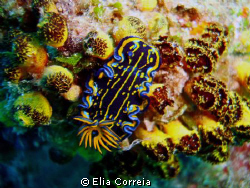 Sea slug! by Elia Correia