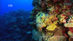 Coral Sea, frame from HDCAM high definition footage. by Pawel Achtel