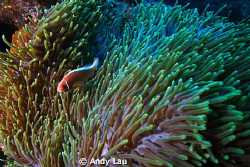 canon 350d   sea&seaflash x 2 by Andy Lau