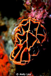 350D sea&sea strobe x 2 by Andy Lau