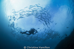 Surrounded by Fish by Christine Hamilton