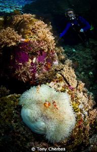 """Finding Nemo"" by Tony Cherbas"