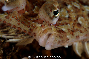 Eyed Flounder close up 10x diopter by Suzan Meldonian