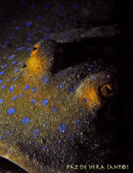 Lighting of the blue spotted stingray was difficult and l... by Paz Maria De Vera-Santos