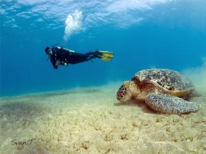 Turtle & Pili by Sven Tramaux