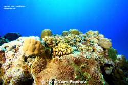 Alot of reef shots that week of diving ,about 6 dives on ... by Jean-Yves Bignoux
