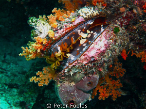No clambakes allowed! Spectacular Healthy Reef. Canon G 12 by Peter Foulds