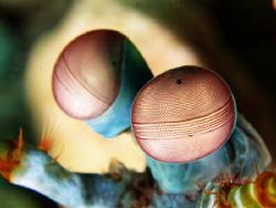 The Eye...... by Bernard Maglana