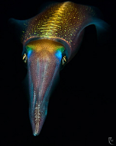 Squid. 
