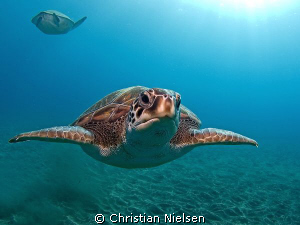 Green turtles, El Puertito, Tenerife. Olympus E330, 8mm f... by Christian Nielsen