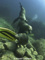 Divers, come play with us !!!!!!!!! by Marco Caraceni