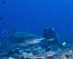 """Shark dive in Papette, Tahiti.  Described as a """"leisure"""" ... by Tim Dimacchia"""