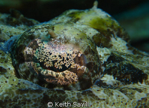 Crocodile Fish eye. Canon Ixus 85, Inon Macro lens, Inon ... by Keith Savill