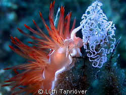 Nudi with eggs.. by Lütfi Tanrıöver