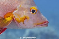 Lips.  Safety stop close up. by Tim Dimacchia