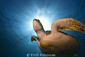 Green turtle and sunlight by Erich Reboucas