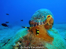 Encounter by chance the Triton in the house reef!!