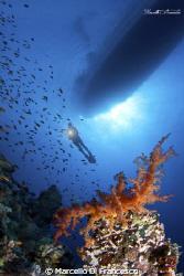 Soft coral in saint jhon reef by Marcello Di Francesco