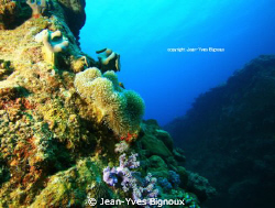 Trou Aux Biches Mauritius ,Underwater Canyons ,at 15metres by Jean-Yves Bignoux