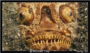 Eyes of stargazer... by Ahmet Yay