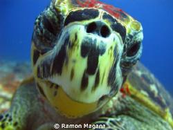 SMILE...!!! by Ramon Magana