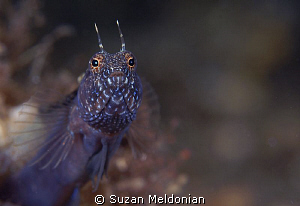 """I am Sincere"" 