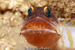 jaw fish with egg by Glenn Carballo