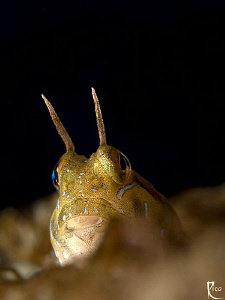 """""""Golden Girl""""  Canon 40D with 60mm makro and +4 closeup ... by Rico Besserdich"""