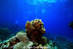 Mauritius Underwater Photography Coin De Mire 7 metres  ... by Jean-Yves Bignoux