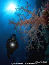 Soft Coral by Marcello Di Francesco