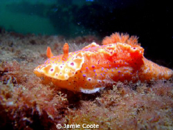 """Nice Nudi""