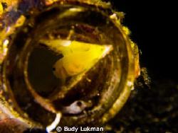Inside a bottle by Budy Lukman
