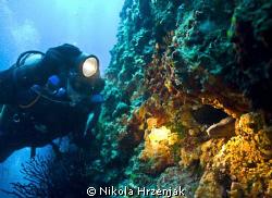 match divers and murine by Nikola Hrzenjak